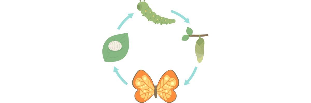 Metamorfose: transição capilar